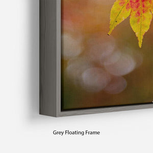 Autumn Colours Floating Frame Canvas - Canvas Art Rocks - 4