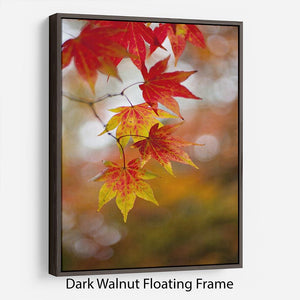 Autumn Colours Floating Frame Canvas - Canvas Art Rocks - 5