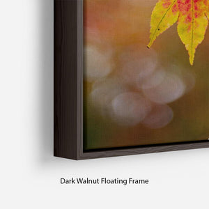 Autumn Colours Floating Frame Canvas - Canvas Art Rocks - 6