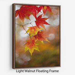 Autumn Colours Floating Frame Canvas - Canvas Art Rocks 7