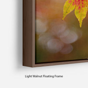 Autumn Colours Floating Frame Canvas - Canvas Art Rocks - 8