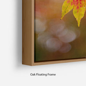 Autumn Colours Floating Frame Canvas - Canvas Art Rocks - 10