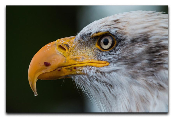 Bald Eagle Canvas Print or Poster