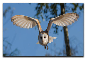 Barn Owl Print - Canvas Art Rocks - 1