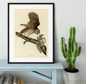 Barred Owl by Audubon Framed Print - Canvas Art Rocks - 1