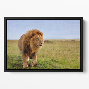 Beautiful Lion Long in Masai Mara Floating Framed Canvas - Canvas Art Rocks - 2