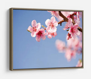 Beautiful colorful fresh spring flowers HD Metal Print