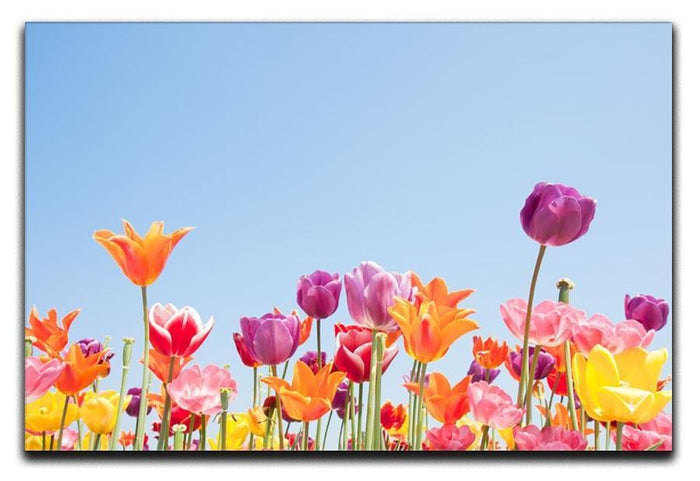 Beautiful coloured flowers Canvas Print or Poster
