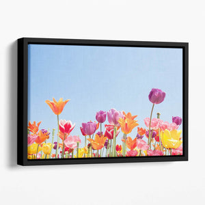 Beautiful coloured flowers Floating Framed Canvas