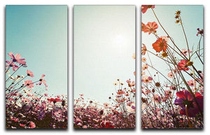 Beautiful cosmos flower field 3 Split Panel Canvas Print - Canvas Art Rocks - 1