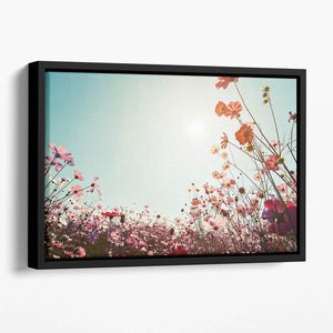 Beautiful cosmos flower field Floating Framed Canvas