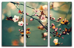 Beautiful flowering Japanese cherry 3 Split Panel Canvas Print - Canvas Art Rocks - 1