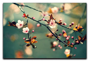 Beautiful flowering Japanese cherry Canvas Print or Poster  - Canvas Art Rocks - 1
