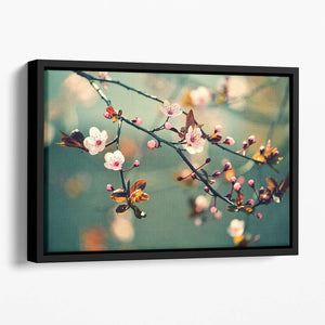 Beautiful flowering Japanese cherry Floating Framed Canvas