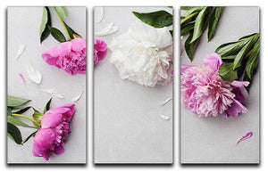 Beautiful pink and white peony flowers 3 Split Panel Canvas Print - Canvas Art Rocks - 1