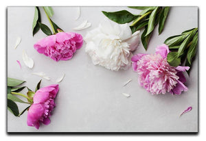 Beautiful pink and white peony flowers Canvas Print or Poster  - Canvas Art Rocks - 1
