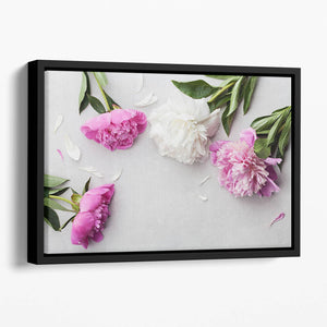 Beautiful pink and white peony flowers Floating Framed Canvas