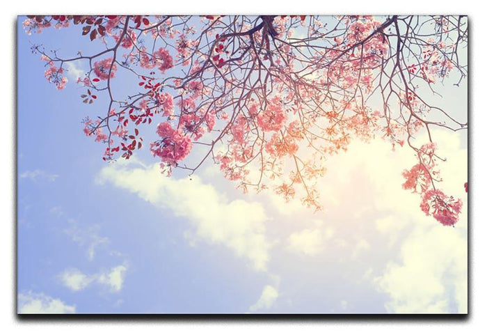 Beautiful tree pink flower in spring Canvas Print or Poster