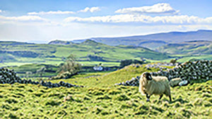 Beautiful yorkshire dales landscape Wall Mural Wallpaper - Canvas Art Rocks - 1