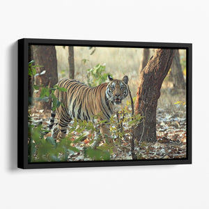 Bengal Tiger Floating Framed Canvas - Canvas Art Rocks - 1