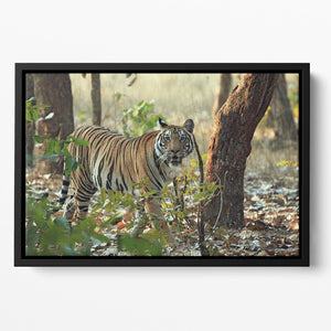 Bengal Tiger Floating Framed Canvas - Canvas Art Rocks - 2