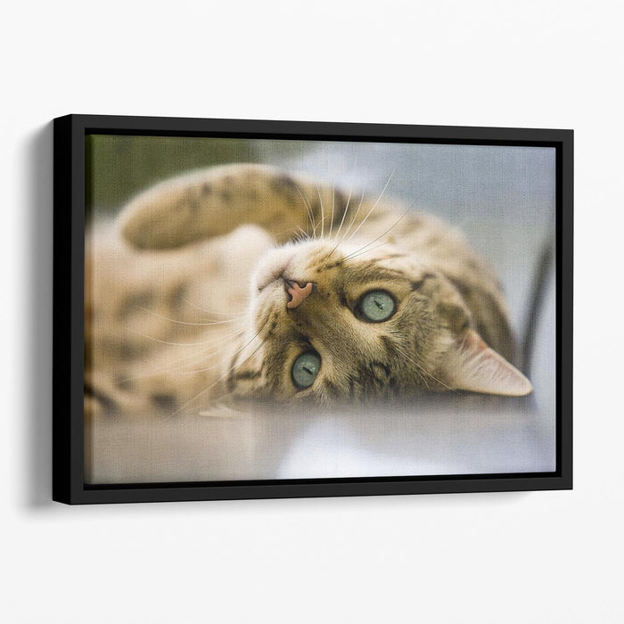 Bengal cat Floating Framed Canvas