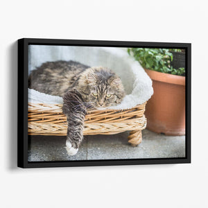 Big fluffy cat lying in wicker chaise sofa couch on balcony or garden terrace with flowers pot Floating Framed Canvas - Canvas Art Rocks - 1