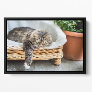 Big fluffy cat lying in wicker chaise sofa couch on balcony or garden terrace with flowers pot Floating Framed Canvas - Canvas Art Rocks - 2