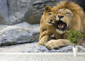 Big lion father and his son playing Wall Mural Wallpaper - Canvas Art Rocks - 4