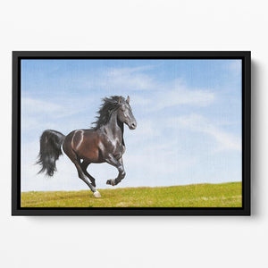 Black Kladruby horse rung gallop Floating Framed Canvas - Canvas Art Rocks - 2