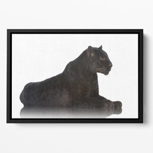 Black Leopard 6 years in front of a white background Floating Framed Canvas - Canvas Art Rocks - 2