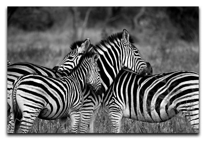 Black and White Zebra Canvas Print or Poster