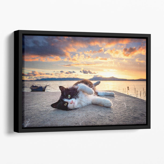 Black and white cat lying under a dramatic sunset on the lagoon Floating Framed Canvas