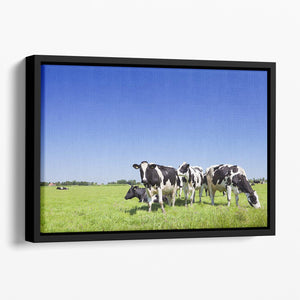 Black and white cows Floating Framed Canvas - Canvas Art Rocks - 1