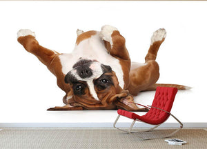 Boxer dog lying on his back Wall Mural Wallpaper - Canvas Art Rocks - 2