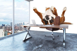 Boxer dog lying on his back Wall Mural Wallpaper - Canvas Art Rocks - 3