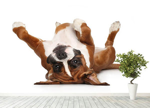 Boxer dog lying on his back Wall Mural Wallpaper - Canvas Art Rocks - 4