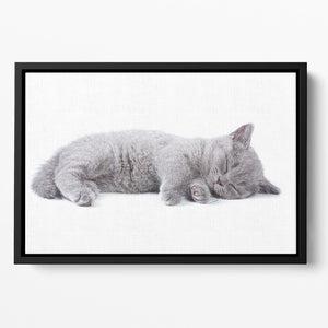 British kitten on white background Floating Framed Canvas - Canvas Art Rocks - 2