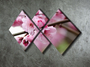 Broken blooming cherry branch 4 Square Multi Panel Canvas  - Canvas Art Rocks - 2