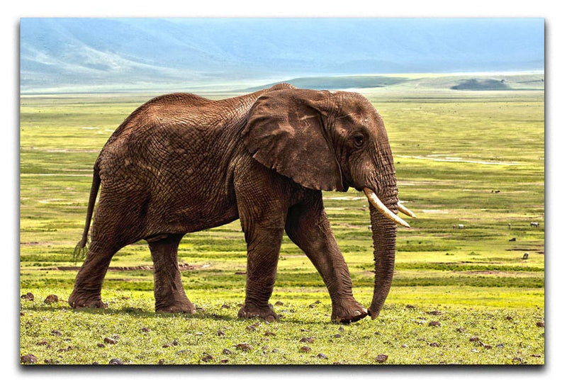 Brown Elephant Print - Canvas Art Rocks - 1