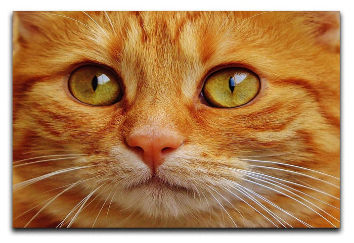 Cat Close Up Canvas Print or Poster