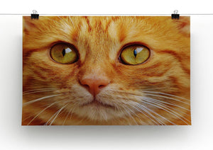 Cat Close Up Print - Canvas Art Rocks - 2