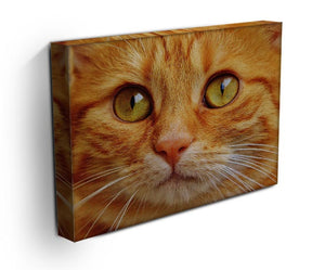 Cat Close Up Print - Canvas Art Rocks - 3