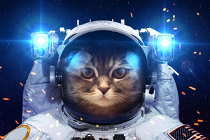 Cat in Space Wall Mural Wallpaper - Canvas Art Rocks - 1