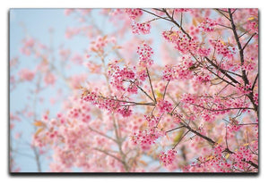 Cherry Blossom Canvas Print or Poster  - Canvas Art Rocks - 1