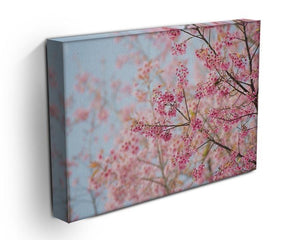 Cherry Blossom Canvas Print or Poster - Canvas Art Rocks - 3