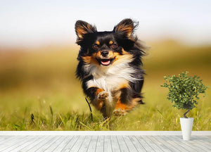 Chihuahua dog running towards the camera in a grass field Wall Mural Wallpaper - Canvas Art Rocks - 4