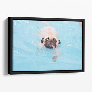Close-up a cute dog puppy Pug Floating Framed Canvas - Canvas Art Rocks - 1
