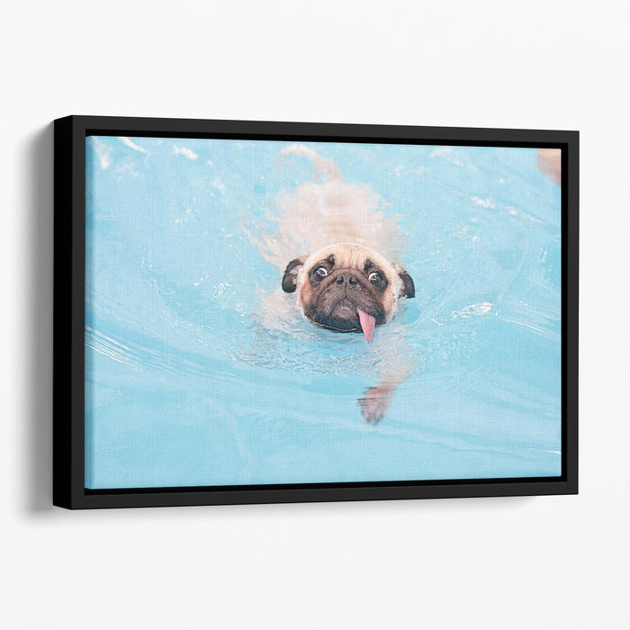 Close-up a cute dog puppy Pug Floating Framed Canvas
