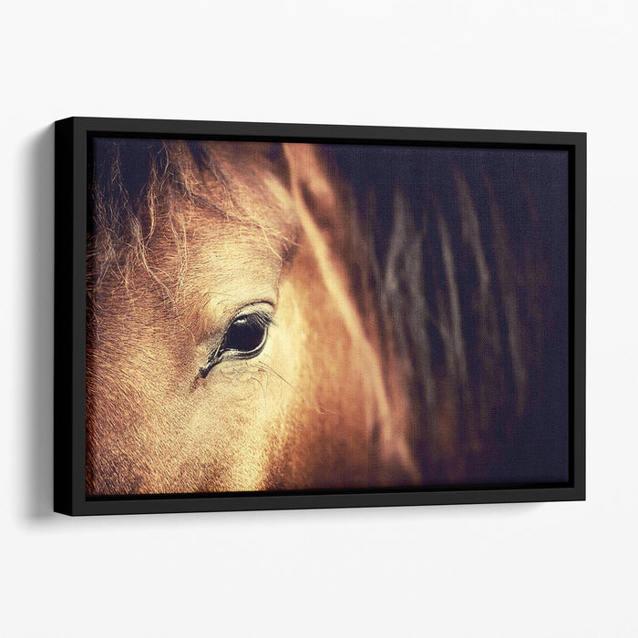 Close-up eye of Arabian bay horse on dark Floating Framed Canvas